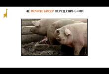 Не мечите бисер перед свиньями